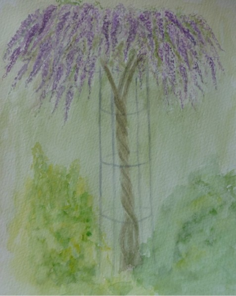 Wisteria-Gift-Chris-Foster