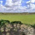 Weald-view-RickL