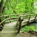 Bridge-with-a-view-RickL