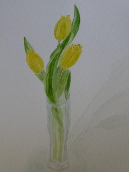 Tulips-Chris-Foster