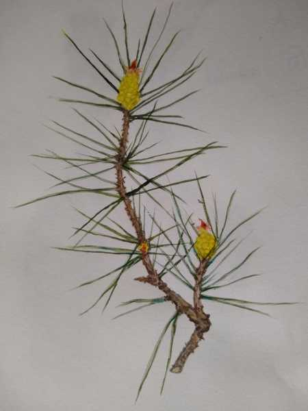 Valerie-Marianni-Yellow-Pine-Flowers
