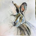 My-Hare-Pat-Myhill